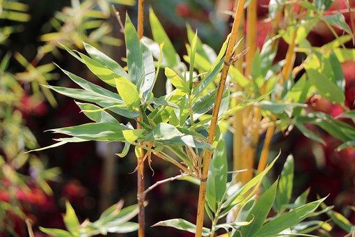 Plant, Nature, Park, Garden, Wild, Botany, Flora