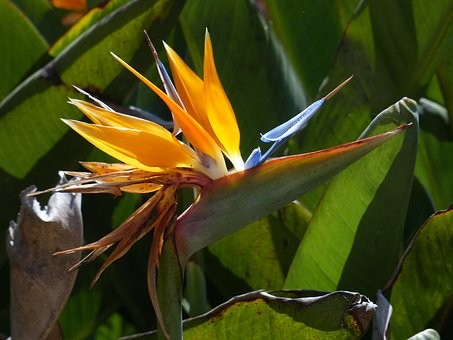 Flower, Nature, Bloom, Flora, Yellow, Garden