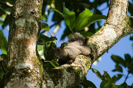 Squirrel, Tree, Leaves, Nature, Forest, Green, Branch