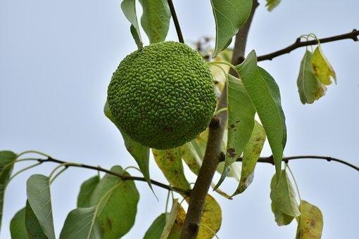 Természet, Fa, Gyümölcs
