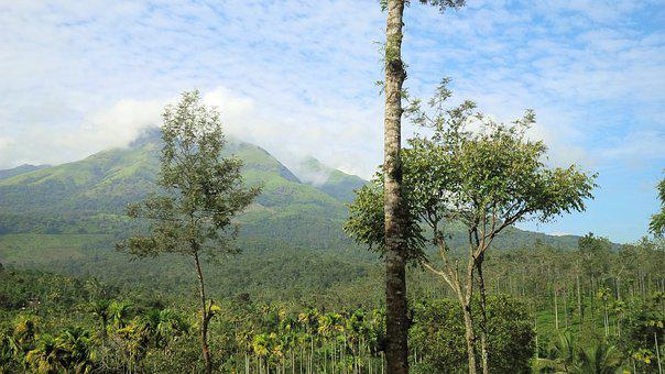 Nature, Landscape, Hills, Green, Kerala, Wayanad, Tree