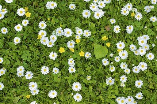 Meadow, Nature, Grass, Idyllic, Wildflowers