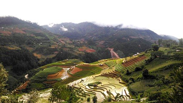 Terraces, Rice Field, Nature, Mountain, Vietnam, Rice