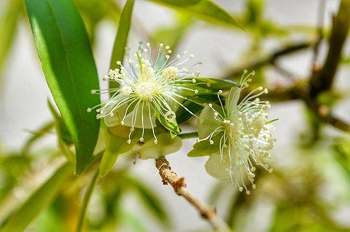 Bud, Tree, Spring, Flower, Nature, Flowers, Plant