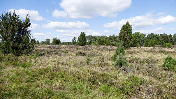 Heide, Lüneburg Heath, Nature, Heathland, Heather