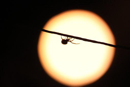 Spider, Night, Insect, Nature, Scary, Phobia, Nervous