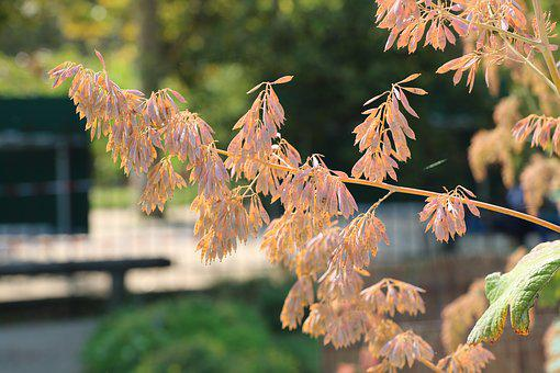 Park, Garden, Nature, Plant, Flower, Bokeh, Flora
