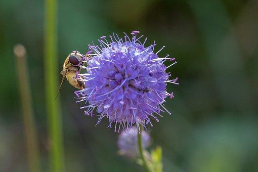 The Devil Bit Off, Moor, Pollen, Swamp, Plant, Nature