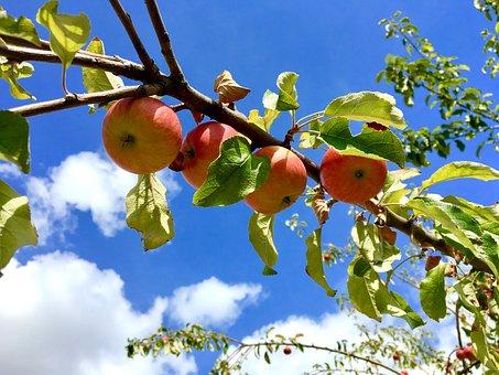 Apple, Apple Tree, Sky, Clouds, Red, Branch, Vitamins