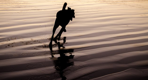 Dog, Reflection, Sand, Silhouette, Nature, Water