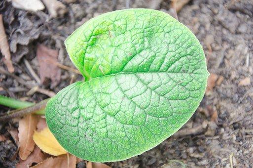 Leaf, Sheet, Green, Summer