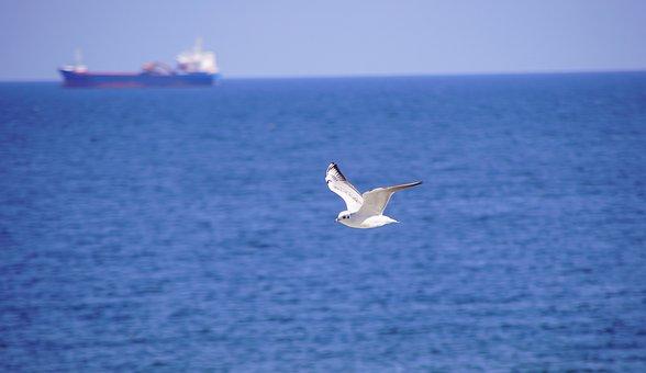 Sea, Seagull, Ship, The Baltic Sea, Bird, Animals