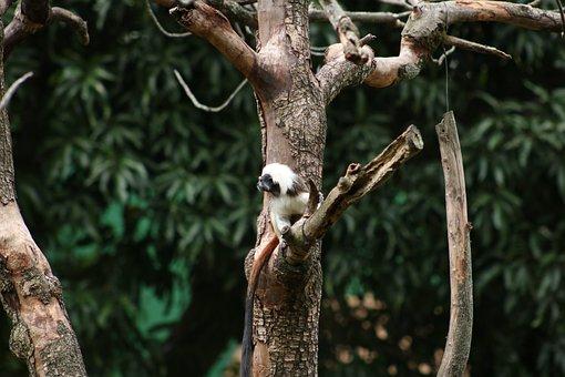 Tree, Primate, Mono, Nature, Wild