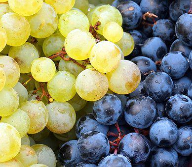 Grapes, Red, White, Harvest, Wine, Winegrowing, Fruit