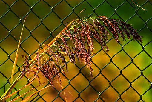 Plume, Reed, Plant, Feathery, Fence, Wire, Mesh