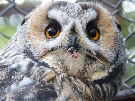 Eagle Owl, Zoo, Bird Of Prey, Hunter