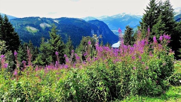 Nature, Alps, Flowers, Landscape, Mountains, Alpine