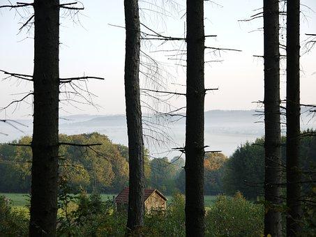Nature, Fog, Landscape, Trees, Autumn