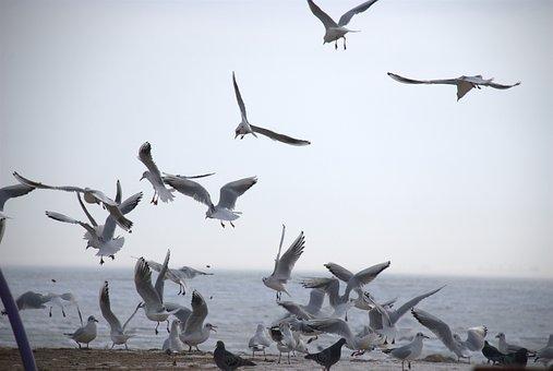 Gulls, Sea, Autumn
