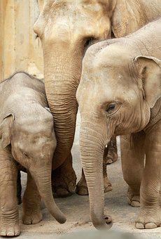 Elephant, Family, Zoo, Baby, Animal World, Young Animal