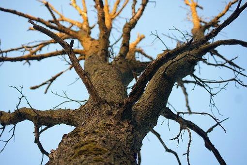 Tree, Nature, Trees, Sky, Clouds, Bark, Evening