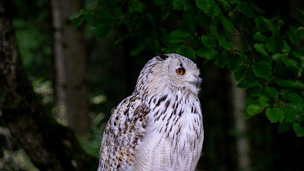 Owl, Animal, Bird, Animal World, Bill, Close Up, Birds
