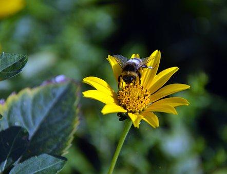 Sun Brews, Flower, Blossom, Bloom, Bloom, Yellow, Bee