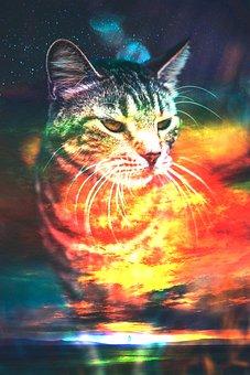 Cat, Sunset, Calm, Horizon, Mustache, Light