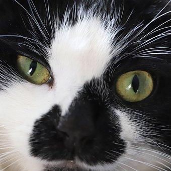 Macro, Cat, Tuxedo Cat, Eyes, Animals, Cute, Pet, White