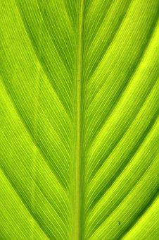 Green, Wood, Nature, Leaf, The Leaves, Chartreuse