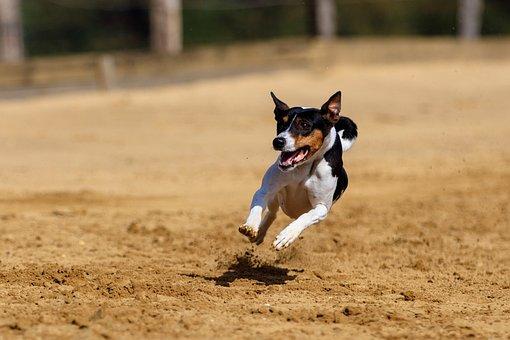 Dog, Greyhound, Pet, Animal Portrait, Dog Portrait