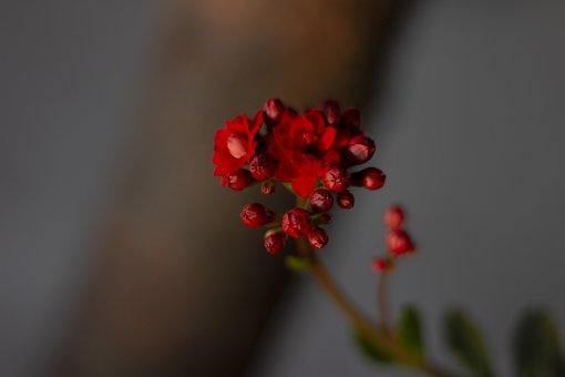Flower, Nature, Spring, Plant, Flowers, Petals, Flora