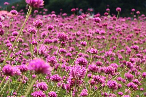 Angel Pink, Butterfly, Flowers, Beautiful, Autumn