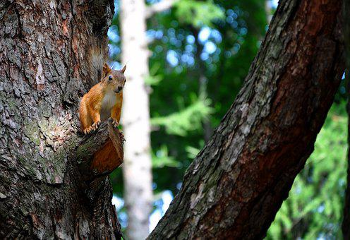 Squirrel, Park, Rodent, Nature, Furry