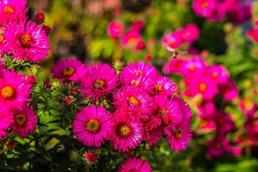 Flowers, Plant, Blossom, Bloom, Spring, Summer, Garden