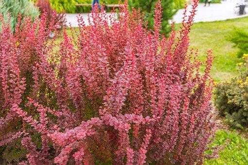Flowers, Plants, Garden, Nature, Summer, Petals, Purple