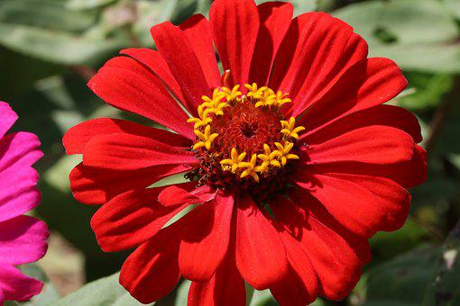 Flowers, Red, Nature, Plants, Garden, Red Color
