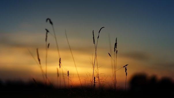 Sunset, Nature, Field, Grass, Landscape, Evening, Sky