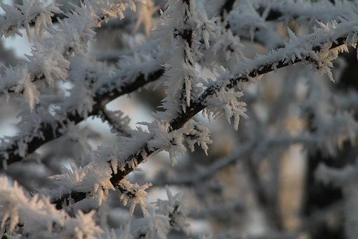 Iced, Aesthetic, Hoarfrost, Frozen, Cold, Frosty