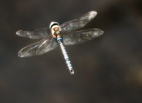 Dragonfly, Flight, Insect, Nature, Wing, Close Up