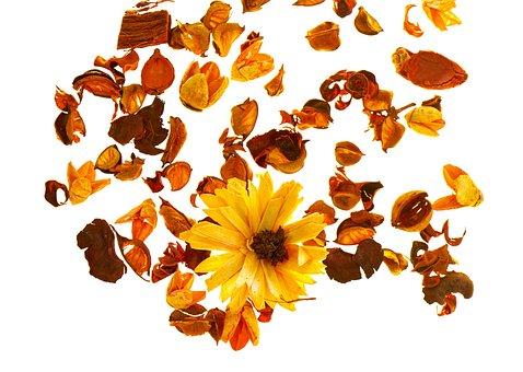Flower, Composition, Current Season, Love, Plant