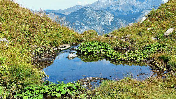 Alps, Mountain Pastures, Water, Nature, Mountain