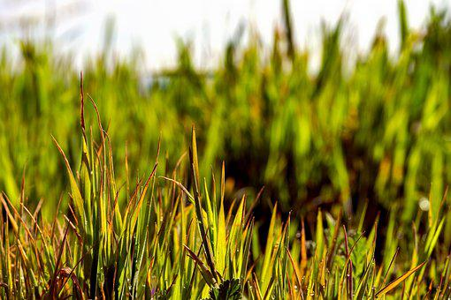 Grass, Green, Nature, Background, Meadow, Field, Lawn