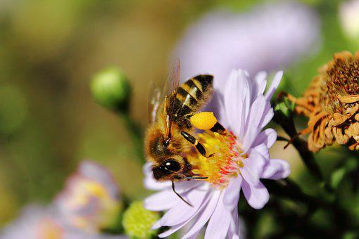 Bee, Flower, Insect, Nature, Pollen, Plant, Blossom