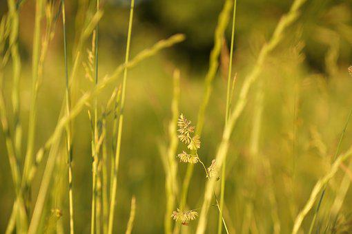 Background, Grass, Nature, Field, In The Summer Of