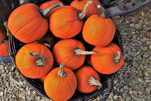 Pumpkins, Orange, Halloween, Food, Collections, Season