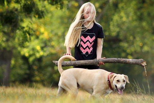 Dog, Play, Girl, Young, Batons, Pet, Animal, Cute