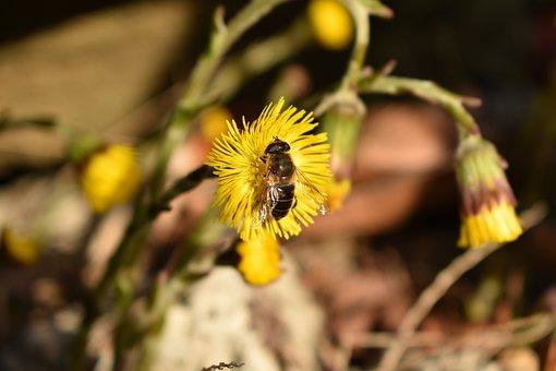 Bee, Cat, Dog, Animal, Plant, Flower, Landscape