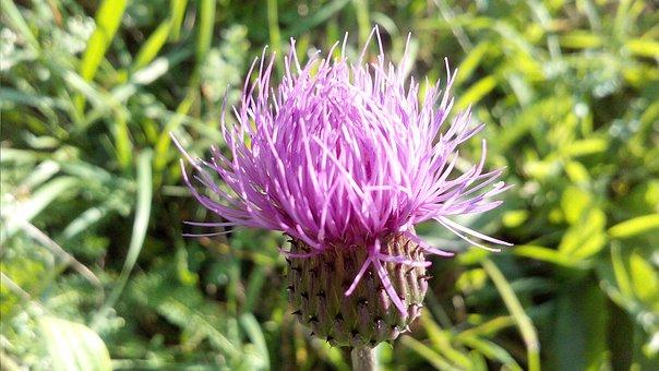 Flower, Nature, Fields, Plant, Bloom, Flora, Garden