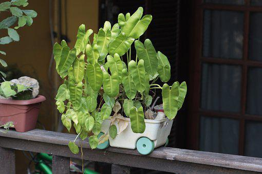 Plant, Vase, Balcony